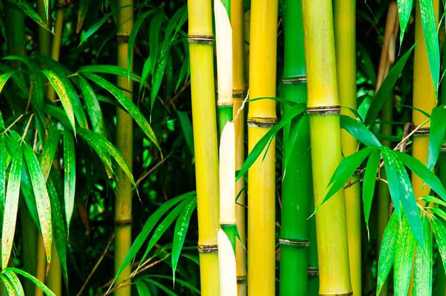 visite bambouseraie anduze